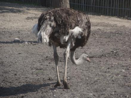 reedyr2010-14